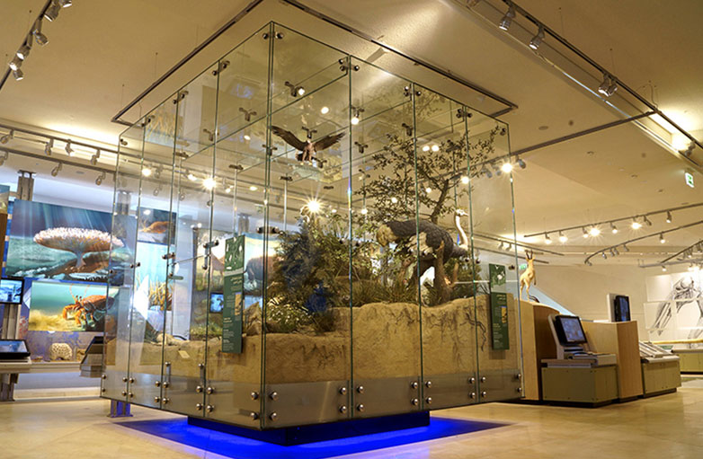glass-display-box